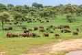 Elephant landscape elephants in tarangire national park tanzania Royalty Free Stock Photo