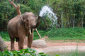 Elephant make water spray nature shower Stock Photos