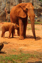 Elephant. Mother with Baby Elephants Walking Outdoors. Royalty Free Stock Photo