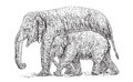 Elephant mother and baby walking beside, asia species sketch