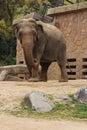 Elephant - Osaka - Japan