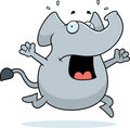 Elephant Panic Royalty Free Stock Images