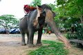 Elephant pattaya waiting for passenger in the thai temple sanctuary of truth in thailand Stock Images