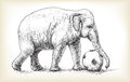 Elephant playing football, sketch free hand draw illustration Royalty Free Stock Photo