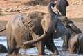 Elephant playing in water with rest Royalty Free Stock Images
