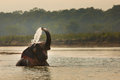 Elephant playing with water in a river, Chitwan Nationl Park, Nepal Royalty Free Stock Photo