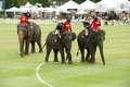 Elephant polo game. Stock Images