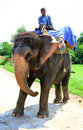 Elephant rider Stock Photos