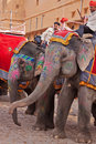 Elephant rides amber india march mahouts and elephants waiting to convey visitors to the the sixteenth century fortress at the Royalty Free Stock Images