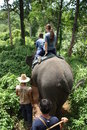 Elephant riding in Thailand Stock Photos
