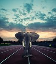 An elephant on the running track