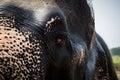 Elephant's half face Royalty Free Stock Photo