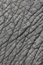 Elephant's skin Royalty Free Stock Photography