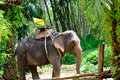 Elephant with seatmount Royalty Free Stock Photo