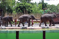 Elephant show in Bali, Indonesia Royalty Free Stock Photo
