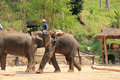 Elephant show at maesa elephant camp chiangmai thailand on apr dragging a log for april Royalty Free Stock Photos