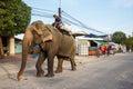 Elephant in Sihanoukville Royalty Free Stock Photo