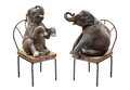 Elephant sitting on chair Royalty Free Stock Photo