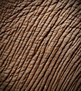 Elephant skin Royalty Free Stock Photo