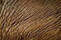 Elephant skin Royalty Free Stock Photo