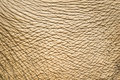 Elephant skin background and texture Royalty Free Stock Photos