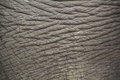Elephant skin close up in nepal Royalty Free Stock Photos