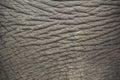 Elephant skin. Royalty Free Stock Photo
