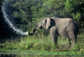 Elephant splash splashing water in kruger national park south africa Royalty Free Stock Photography