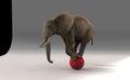 Elephant in studio on red sphere Stock Photos