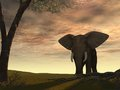 Elephant with the sun from behind Royalty Free Stock Photo