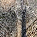 Elephant tail Royalty Free Stock Photo