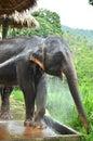 The elephant take a bathe Stock Images