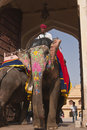 Elephant Taxi Royalty Free Stock Photography