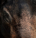 Elephant texture Royalty Free Stock Photos