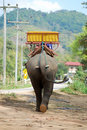Elephant in Thailand Stock Photos