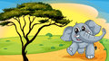 Elephant under a tree Stock Image