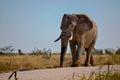 Elephant walking down the road Royalty Free Stock Photo
