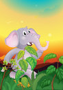 An elephant walking in the field illustration of Royalty Free Stock Photo