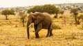 Elephant walking through landscape Stock Image