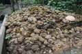 Elephant waste balls of dung piled up Stock Images