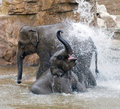 Elephant in the water Royalty Free Stock Photos