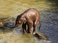 Elephant in water Stock Photography