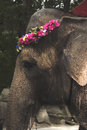 An elephant wearing a flower wreath in a zoo