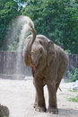 Elephant zoo having sand shower Stock Photography