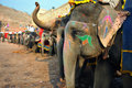 Elephants at amber fort Royalty Free Stock Photo