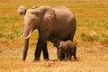 Elephants in amboseli mother and baby shot at national park kenya Royalty Free Stock Photos