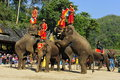 Elephants as Tourist Attraction, China Royalty Free Stock Images