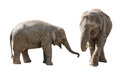 Elephants asian mother and daughter isolated on white background Royalty Free Stock Images