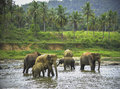 Elephants bathe group of bathing in the river Stock Photos
