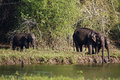 Elephants are drinking water in the river Royalty Free Stock Photos